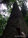 Ash and a big Tulip Poplar
