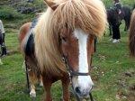 Ash's horse Goldie